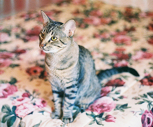 cat, floral, and bed image