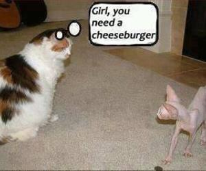 cats, kittens, and funny image