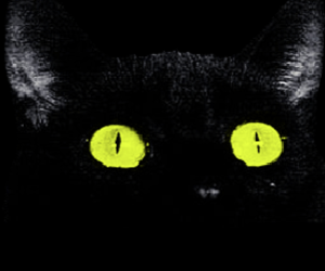 eyes and meeow image