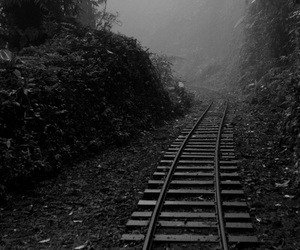 forest, black and white, and railroad image