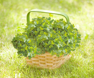 beauty, clover, and nature image