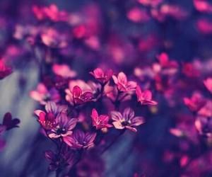flor, naturaleza, and nature image