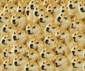 Animales, doge, and perro image