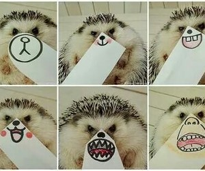 animal, emotions, and hedgehog image