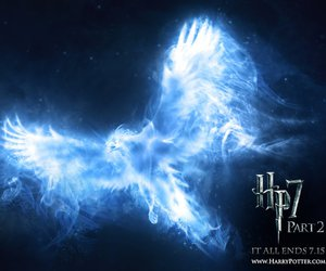 harry potter, patronus, and phoenix image