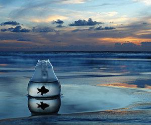 fish, sea, and water image