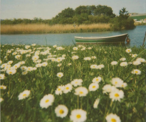 flowers, boat, and daisy image