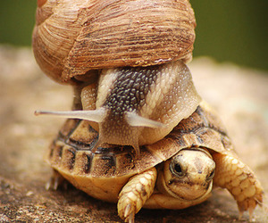turtle, snail, and animal image