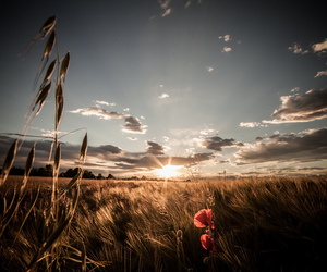 countryside, flower, and photography image