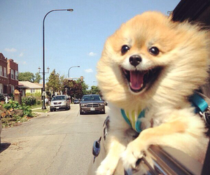 dog, funny, and happy image