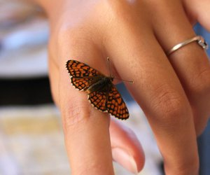butterfly, hand, and papillon image