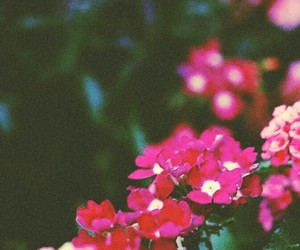 flowers, photo, and vintage image