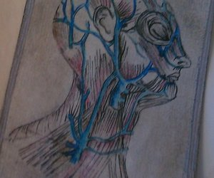 greys anatomy, anatomy art, and artist trading card image