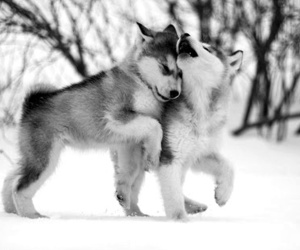 black and white, dog, and doggy image