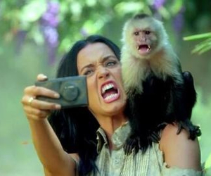 roar, katy perry, and monkey image
