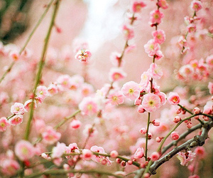 beautifull, brown, and cherry blossoms image