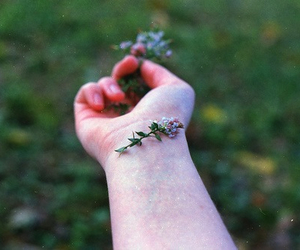 flowers, photography, and hand image
