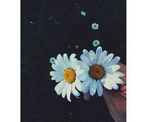 black and white, daisys, and flowers image