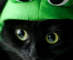 frog, kitty, and cute image