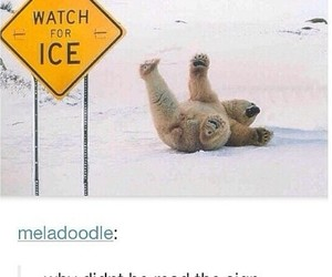 fall, funny, and ice image