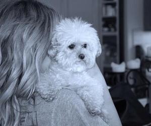ashley tisdale, beautiful, and dog image