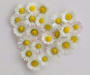 daisy, flowers, and love image