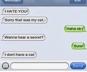 funny, cat, and hate image