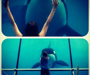 movie, orca, and rust and bone image