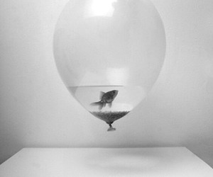fish, balloons, and water image