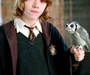 harry potter, ron weasley, and owl image