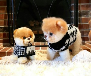 dog, boo, and cute image