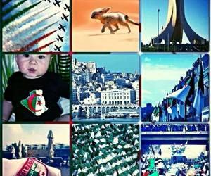 dz, algerie, and fenek image
