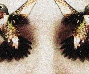 birds, eyes, and makeup image