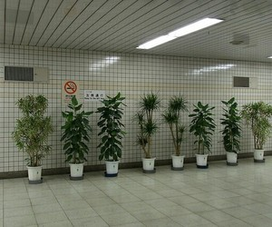 plants, grunge, and pale image