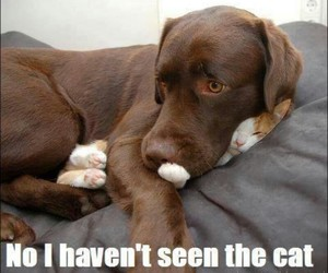 and, so funny, and cat image