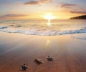 turtle, beach, and animals image
