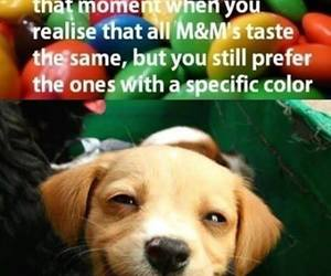 dog, funny, and m&m image