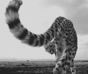 blackandwhite, photography, and rawr image