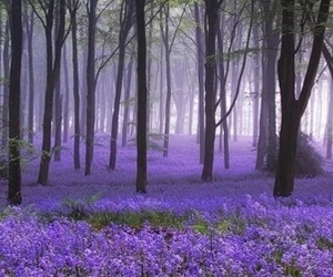 stunning places image