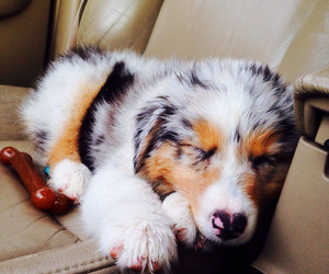 puppy, sleepy, and cute image