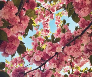 beautiful, blossoms, and flowers image