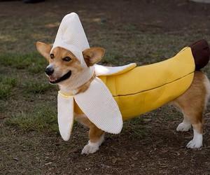 dog, banana, and animal image