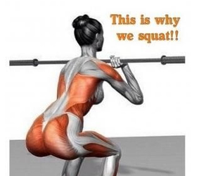 squats and butt image