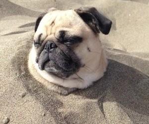 beach, pale, and pug image