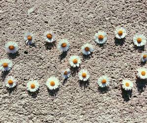 flowers, infinity, and daisy image