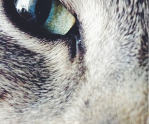 cat, loveu, and eye image