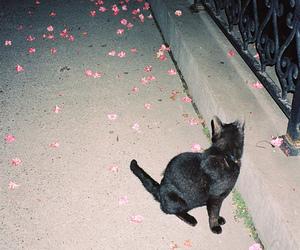 cat, grunge, and black image