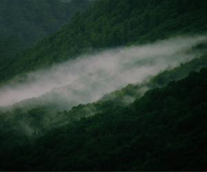 dark, fog, and indie image