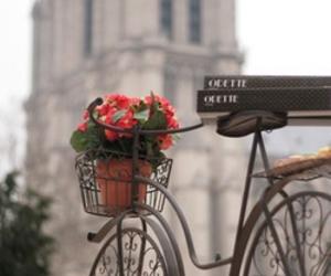 flowers, paris, and bike image