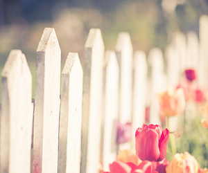 flowers, tulips, and fence image